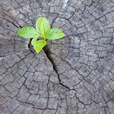 Pflanze aus Baumstamm_Zuschnitt